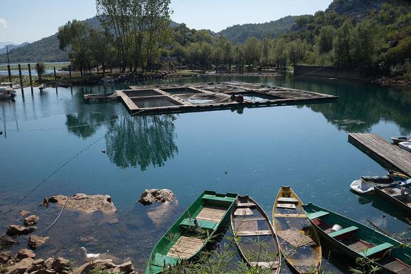 15.9. Karuć, der Skadarsko Jezero ist der größte See der Balkanhalbinsel (1/3 der Fläche liegen in Albanien, der Rest in Montenegro).