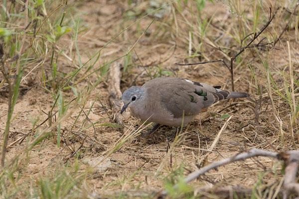 25.4. Mahango Game Reserve