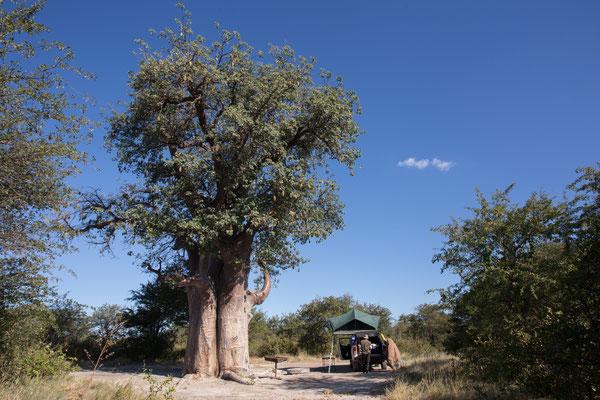 12.05. Nxai Pan NP, unsere tolle Campste Nr. 3 verfügt auch über einen riesigen Baobab