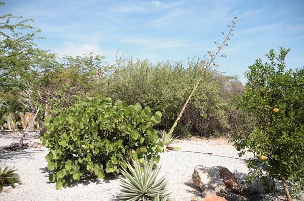 Casa Bonito: die Pflanzen werden durch ein Drip System bewässert