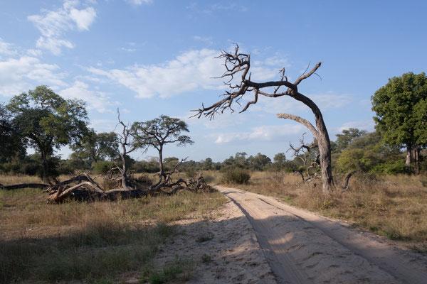 26.4. Bwabwata NP/Kwando Core Area