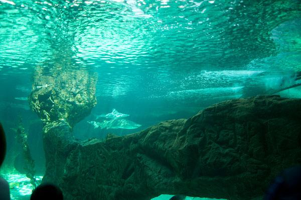 ... besuchen wir das Aquarium von Madrid.
