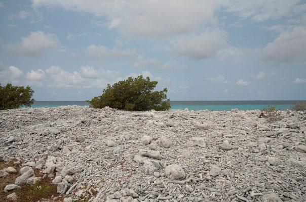 Südküste: jede Menge Korallenstücke in allen Größen bedecken die Küste