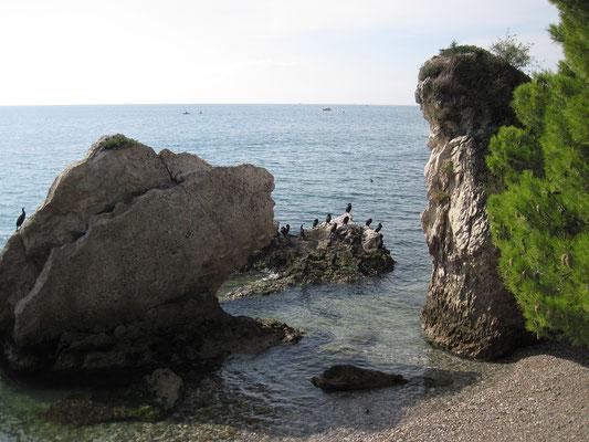 17.10. Heute machen wir einen schönen Ausflug nach Miramare.