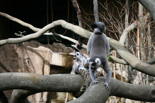 Skansen, Zoo