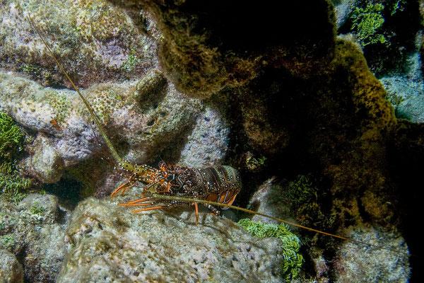 Tobago Cays Marine Park, schnorcheln nach Sonnenuntergang