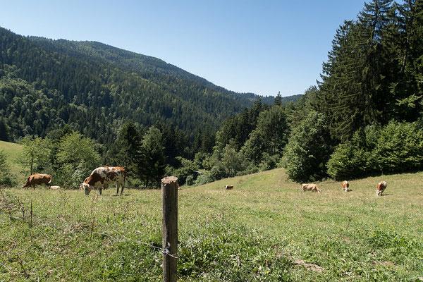 15.08. Am Heimweg, nördlich von Slovenj Gradec