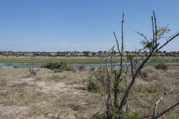 13.05. Makgadikgadi Pans NP, es geht über eine recht tiefsandige Pad nach Süden und das malerische Boteti-Ufer entlang.