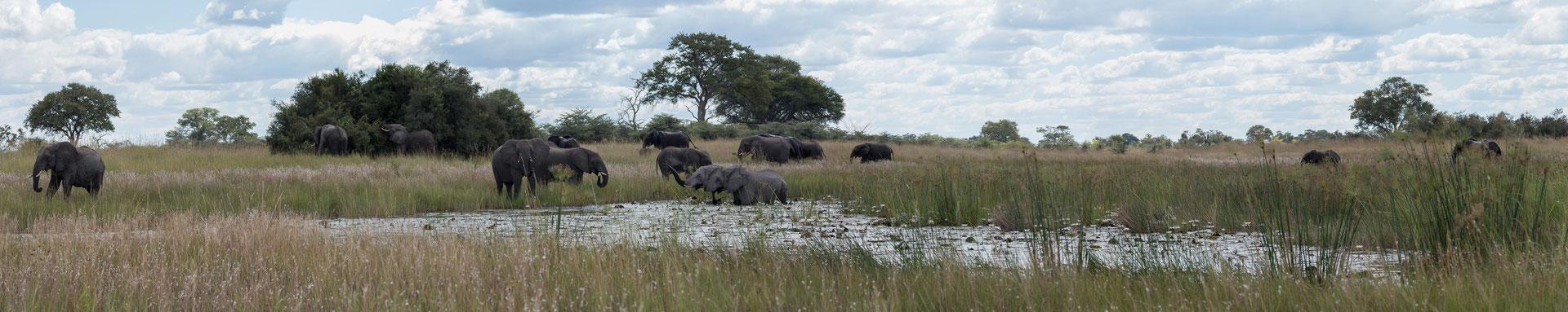 27.4. Mavunje - Bootstour; wir treffen auf Elefanten, ein tolles Erlebnis.