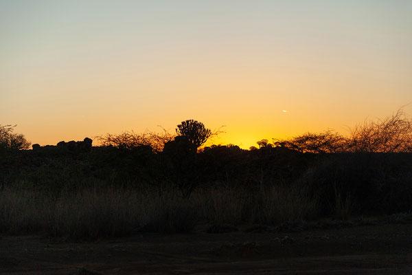14.02. Sonnenaufgang über Mesosaurus
