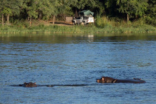 25.4. Bootsfahrt am Kavango, Flusspferde - Hippopotamus amphibius & unsere Campsite