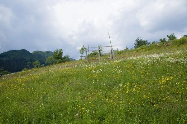 02.06. Von Glod nach Poienile Izei.