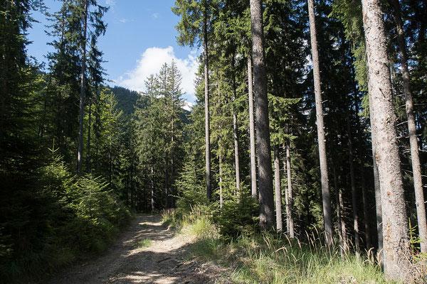 14.08. Strecke über den Smrekovec Richtung Črna