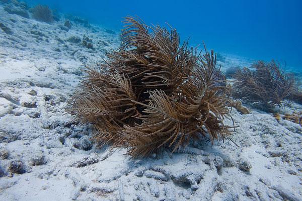 """""""Tori's Reef"""""""