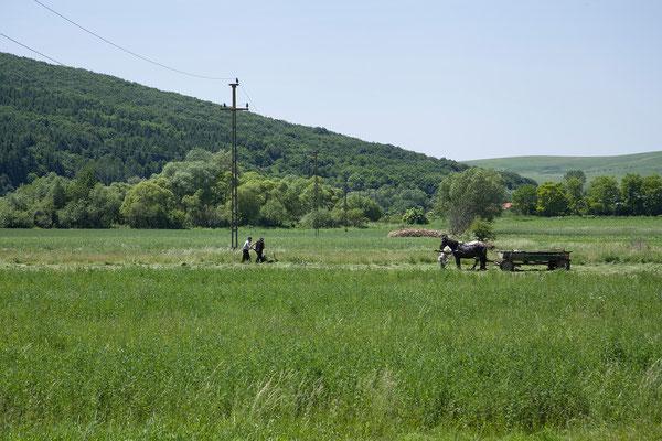 06.06. Unterwegs von Viscri nach Târgu  Secuiesc