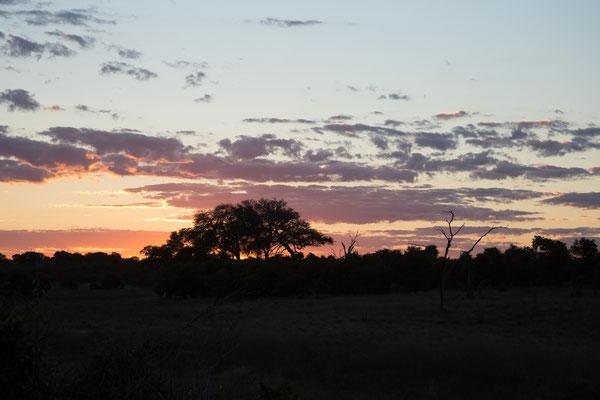05.05. Chobe NP; wir verbringen einen gemütlichen Abend auf unserer Campsite.