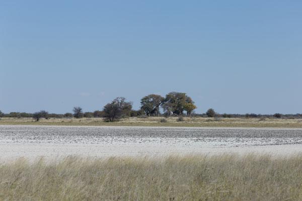 12.05. Nxai Pan NP, wir nähern uns Baines Baobabs (Adansonia digitata)