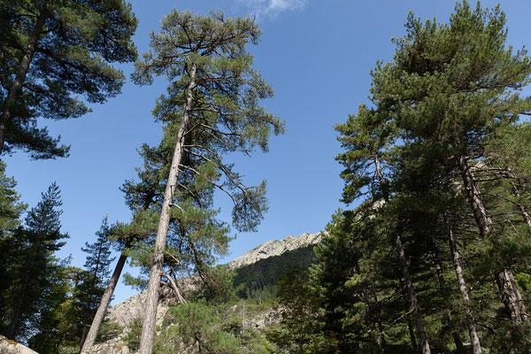 03.06.  Spaziergang zu den Piscines d'Aitone