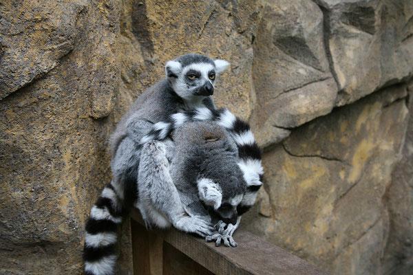 In Skansen gibt es auch einen Zoo.
