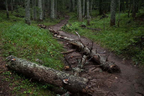 9.9. Vom Camping Ivan Do spazieren wir durch einen schönen Wald zum nahen Crno Jezero.