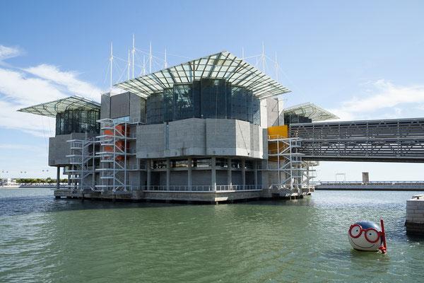 17.09. Parque das Nações: Das von Peter Chermayeff entworfene Oceanário ist eines der schönsten Aquarien Europas.