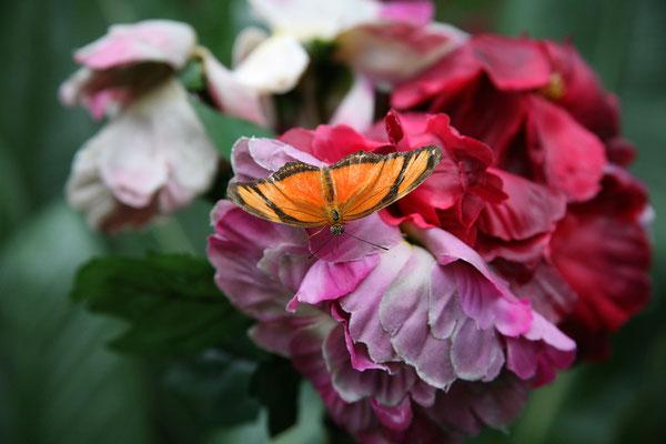 Fjärilshuset