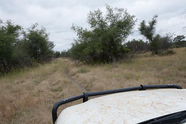 25.4. Mahango Game Reserve; nach der Strecke am Fluss fahren wir noch eine weitere, wenig befahrene, 4x4 Route.