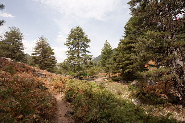 03.09. Wanderung im Manganello Tal, Bergerie de Tolla