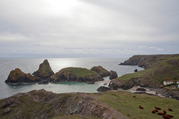 08.09. Kynance Cove, Lizard Peninsula