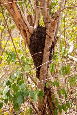 Termitennest im High North Nationalpark