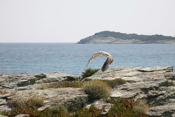6.6. Cap Corse: Barcaggio