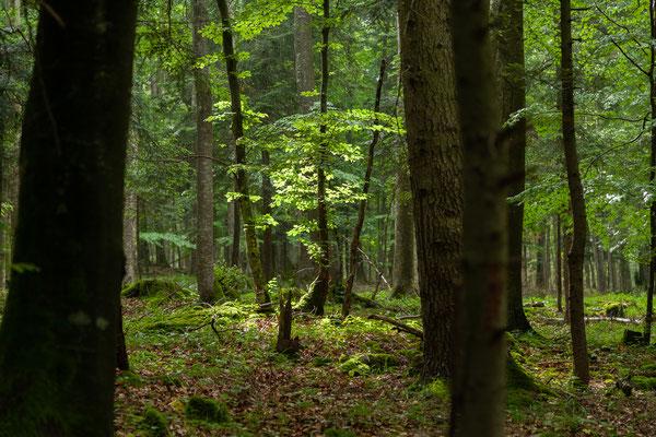 20.06. Durch ein schönes Waldgebiet fahren wie Richtung Postojna