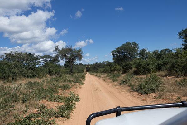 04.05. Chobe NP; wir werden die kommenden 7 Tage keine Teerstraßen mehr sehen und auch keinen Handyempfang haben.