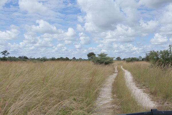 28.4. Mudumu NP; landschaftlich ist es toll hier, tierische Sichtungen halten sich allerdings in Grenzen.