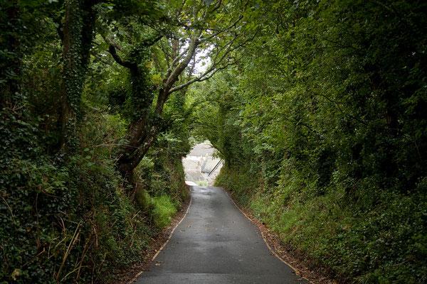 09.09. Überall im Süden Englands fahren wir durch grüne Tunnel.