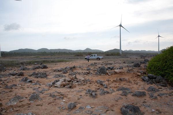 An der Ostküste - Windräder