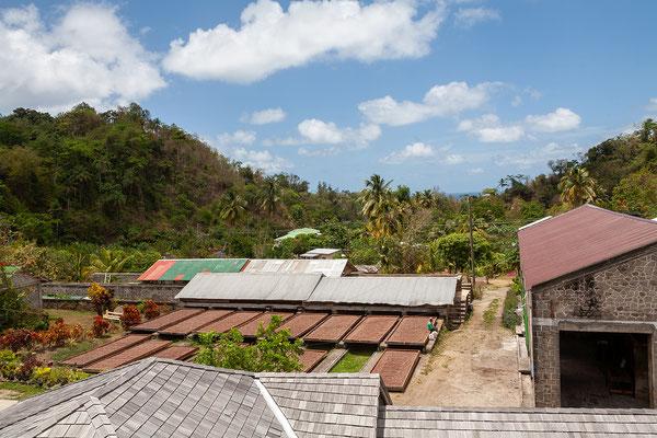 Belmont Estate: Kakaobohnen