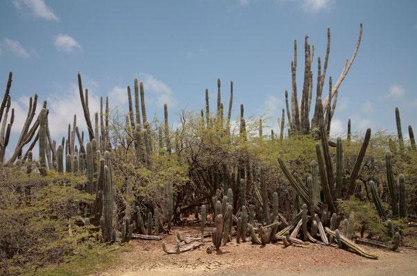 Aride Vegetation prägt das Landesinnere der Insel