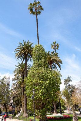 03.04. Parque La Glorieta