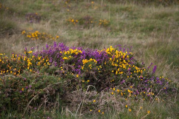 12.09. Dartmoor