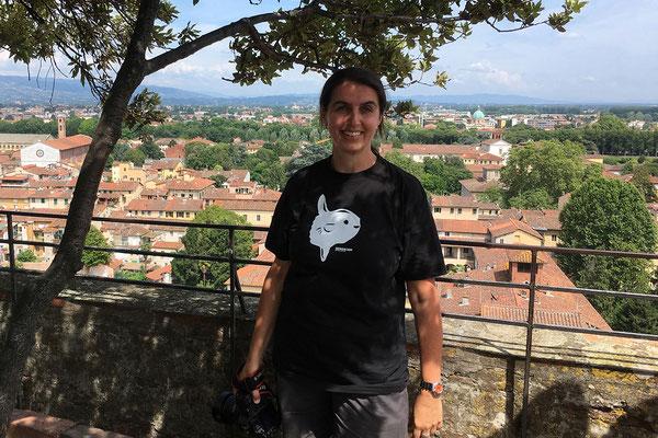 07.06. Die Steineichen wachsen seit Jahrhunderten auf dem Torre Guinigi in Lucca.