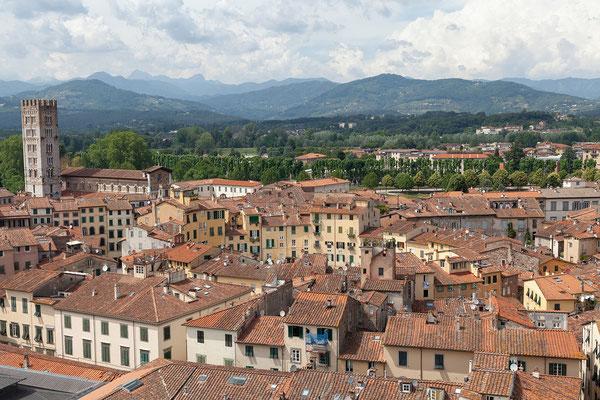 07.06. Lucca: Blick vom Torre Guinigi