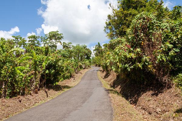 Belvedere Road