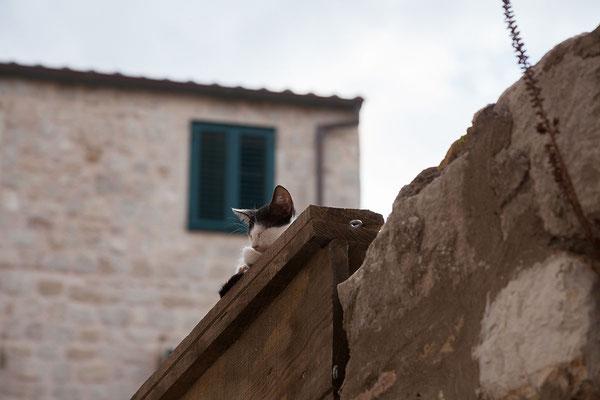 21.09. Dubrovnik - Pustjerna
