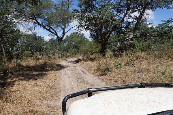 26.4. Bei Kongola besuchen wir den am Kwando gelegenen Teil des Bwabwata Nationalparks.
