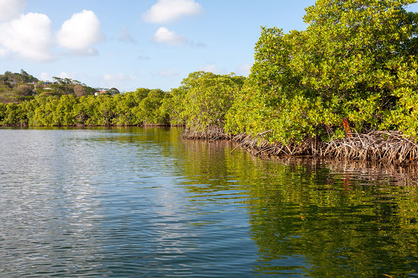 Tyrrel Bay (Carriacou)
