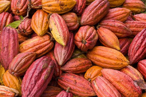 Spice and Herb Garden, Kakao