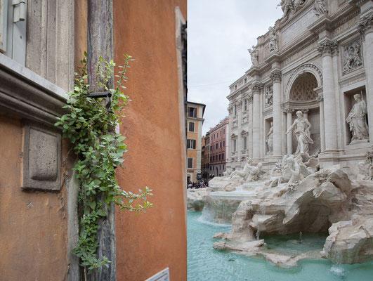 19.05. Fontana di Trevi