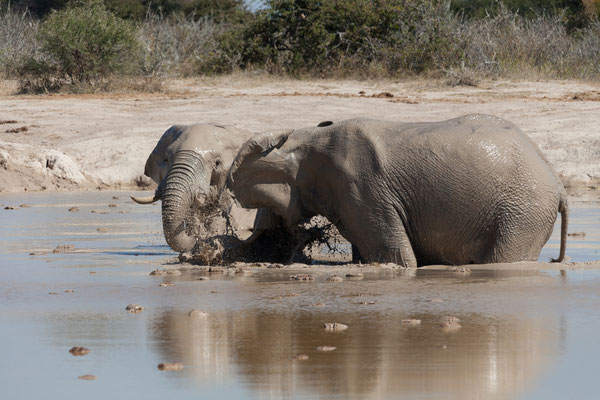12.05. Nxai Pan NP, auch heute beoachten wir die Elefanten am South Camp Wasserloch lange.