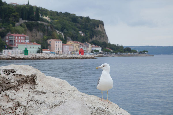 Piran, Uferpromenade